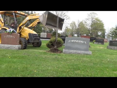 Ripping out shrubs with the 110TLB loader