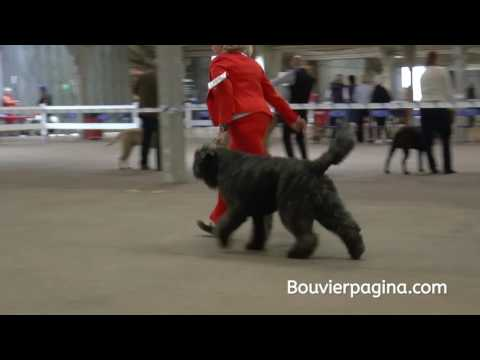 City of Birmingham - Championship Dog Show  Post Graduate