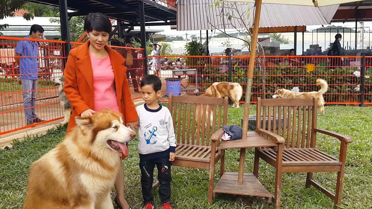 Những chú Chó đặc biệt tại Nông trại cún PUPPY Farm Đà Lạt – Cuộc sống Đà Lạt
