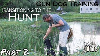 Gun Dog Transitional Training | Part 2