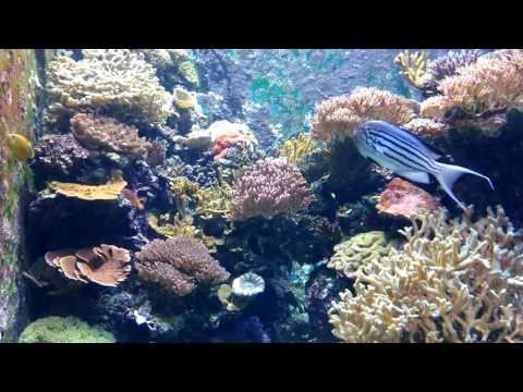 Singapore - The Fascinating S.E.A. Aquarium