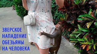 Зверское нападение обезьяны на человека