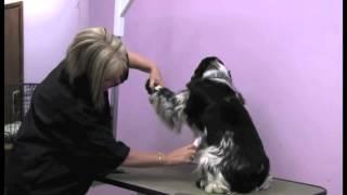 Abbfabb Academy-grooming The Cocker Spaniel-introduction