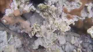 cuentamelo en 3 minutos ¿Que es la biología marina?