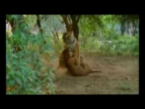 Traditional Silat Harimau
