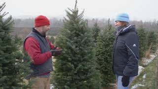 Types of Trees at NH Christmas Tree Farms