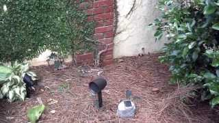 Sonance SR 1 landscaping system install, www.IrisAVD.com Greenville SC