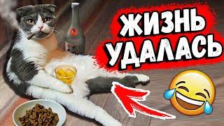 ПРИКОЛЫ с КОТАМИ 2020 / Смешные Животные / Коты и Кошки Я РЖАЛ ЦЕЛЫЙ ЧАС