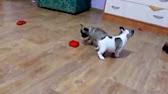 y родословную для собаки екатеринбург - YouTube