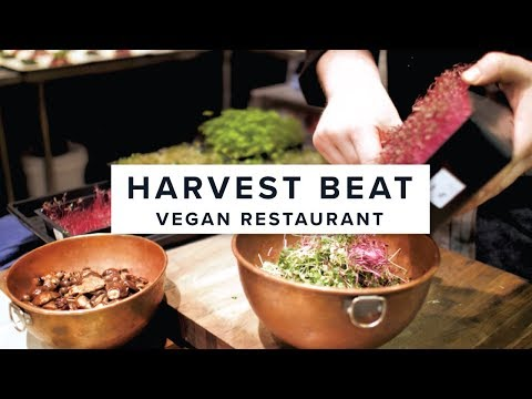 Harvest Beat // Small Business Feature