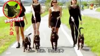 Animals Taiwan 台灣動物協會: The MOST AMAZING ADOPTION VIDEO EVER! 史上最棒的認養影片!