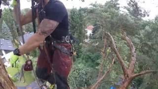 Gefahrenfällungen, Immer an die Baumstatik denken Tree climbing Arborist - Rigging - Tree damage