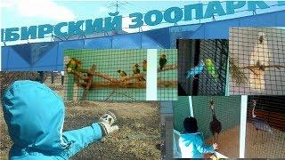 #zoo зоопарк птицы зимний корпус 2017 #oiseaux