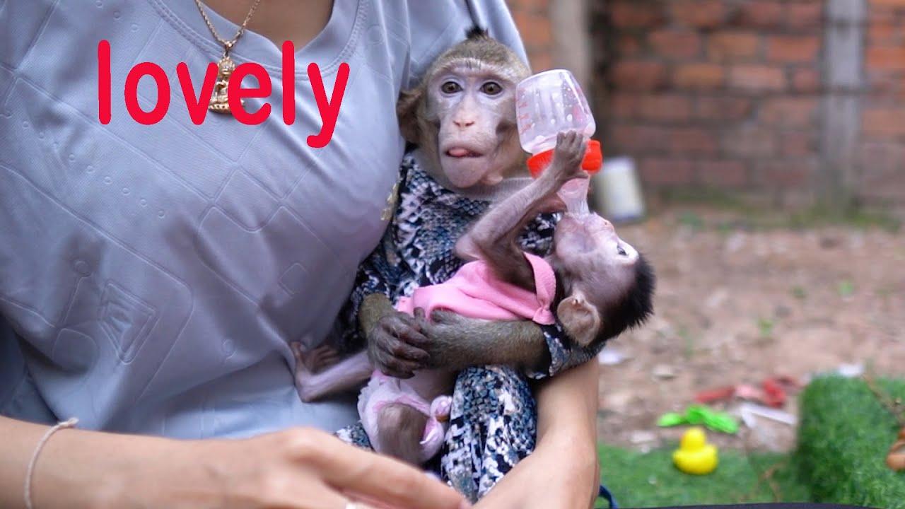 Smart monkey Too so lovely sit hug cute baby monkey Mey Mey.