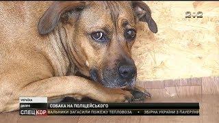 У Дніпрі п'яний чоловік нацькував на копів бійцівського собаку
