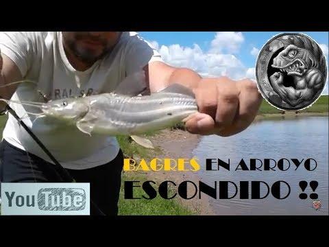 BAGRES | ARROYO ESCONDIDO #4 | RECORRIENDO EL SAMBOROMBON