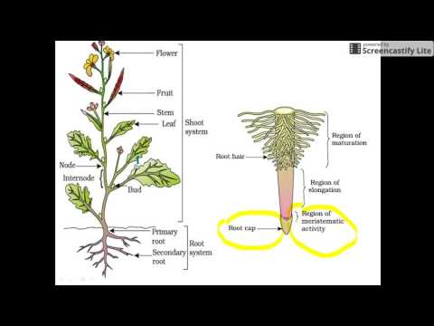 Plant Morphology for NEET and AIIMS (Root-1)