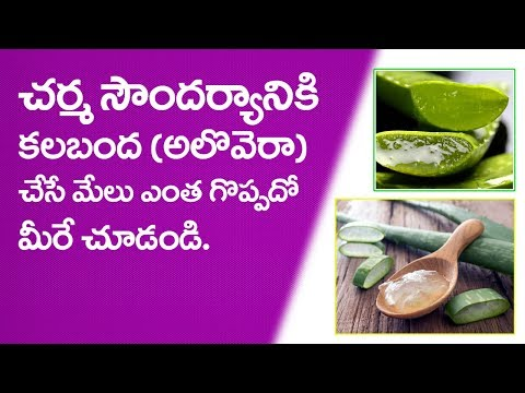 Aloe Vera Beauty Tips For Beautiful Skin   Ayurveda Samadhanam