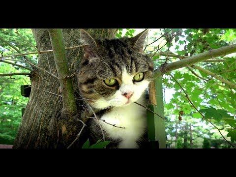 木登り体験を楽しむねこ。-Maru&Hana enjoy a tree climbing experience.-