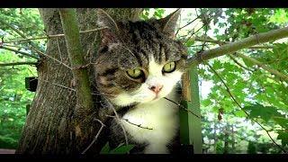 木登り体験を楽しむねこ。-Maru&Hana enjoy a tree climbing experience.- thumbnail