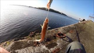 Peche en mer du bord (Morbihan)