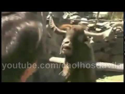 System of a Down - I E A I A I O (Goat Edition)