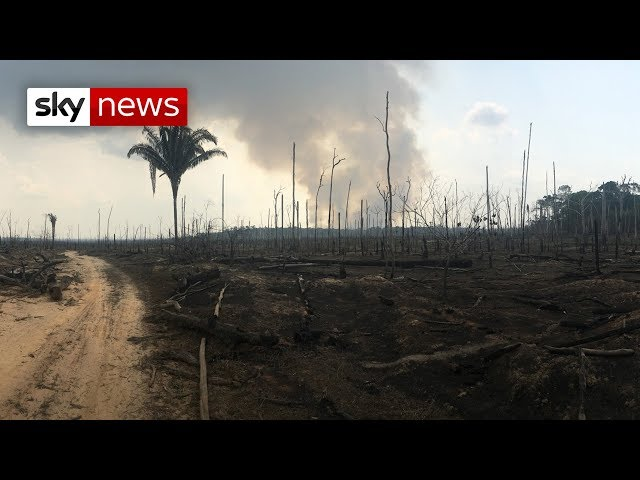Amazon wildfires: Vast area devastated in Northern Brazil over manmade fires