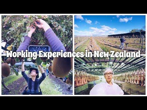 Working Experiences in New Zealand   Benjamin Gabriel