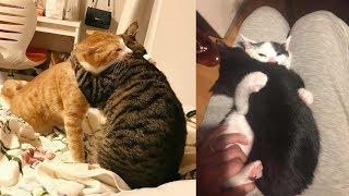 猫ちゃんのハグしている姿&ポーズがヤバいくらい可愛いw~A cat huggin...