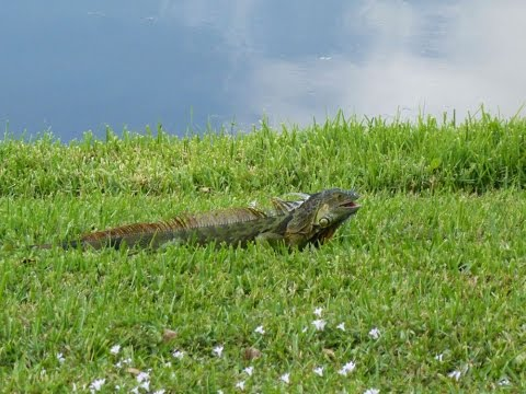 Florida Critters - Herons, Egrets, Dolphins, Iguanas, Pelicans, Ghost Crab, Otters, Gulls and more