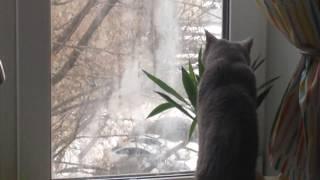 Кота застали на месте преступления ) ел юкку