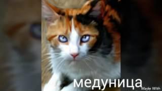 Коты-воители ( герои )