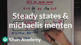 Steady states and the Michaelis Menten equation | Biomolecules | MCAT | Khan Academy thumbnail