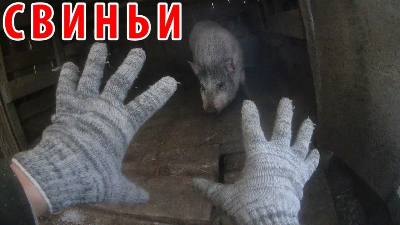 про село - ЗАБОЙ СВИНЕЙ / деревенская россия / свиноводство / ЛПХ / КФХ / #сельхоз-влог