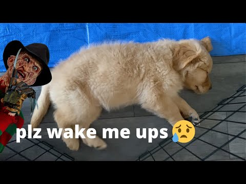 2 minutes of puppy nightmares