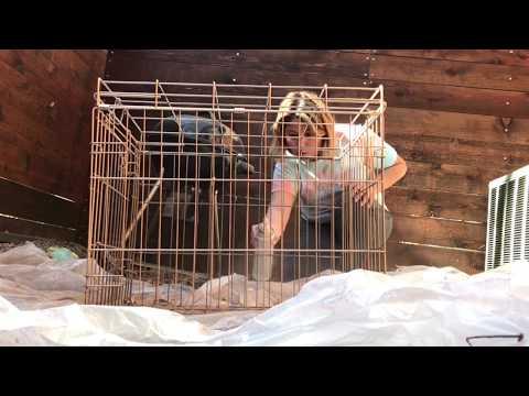 DIY Metallic GOLD🐶 Dog Kennel