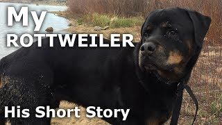 My Rottweiler Dog- With a Tail - Howling - Our Journey :: Episode #56