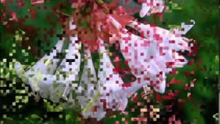 Video Ernesto Cortazar - Sonar download MP3, 3GP, MP4, WEBM, AVI, FLV Agustus 2018