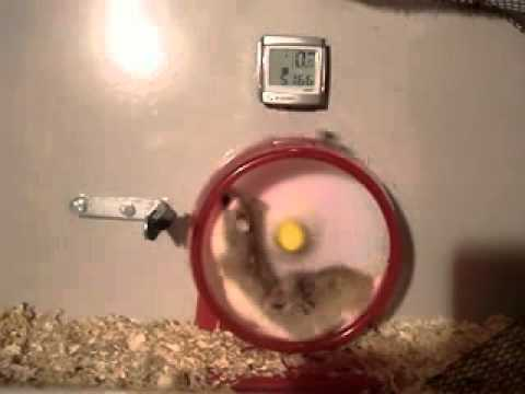 Смешные хомяки. Смешное видео про животных смотреть онлайн
