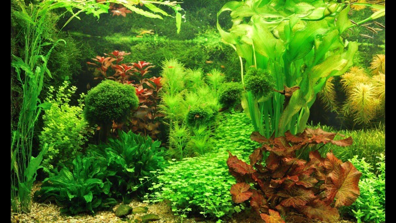 Rondje Nederlandse aquaria   YouTube