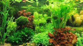Rondje Nederlandse aquaria