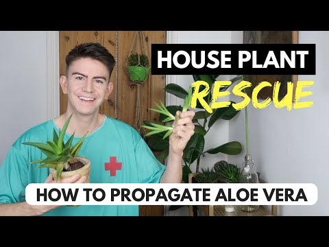 HOW TO PROPAGATE ALOE VERA LEAVES & PUPS! | HOUSE PLANT RESCUE