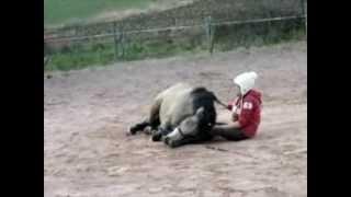 Umla, l'histoire d'un poney