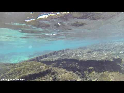 Snorkeling Tide Pools in Kapoho Hawaii Before 2018 Kilauea Volcano Eruption