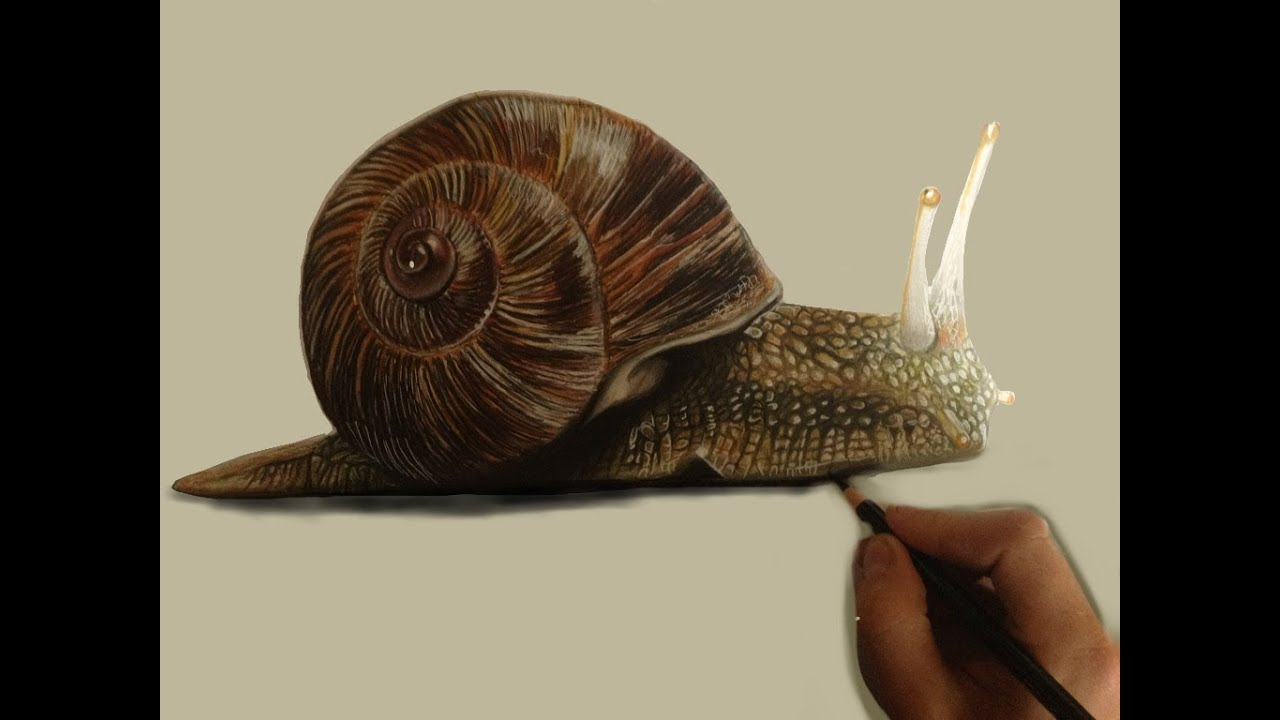 How to Paint a Snail