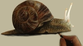 How I draw and paint a snail