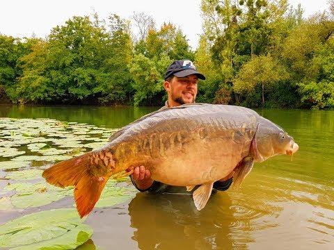 Big French River Carp