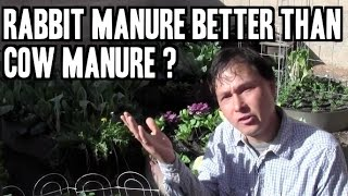 Rabbit Manure Better than Cow Manure for Organic Gardening? and more Q&A