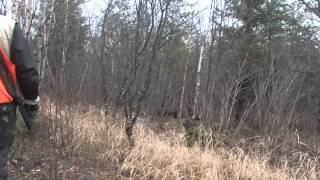 2014 Ontario Grouse Hunting At Kap River Outfitters With Bird Dogs Afield