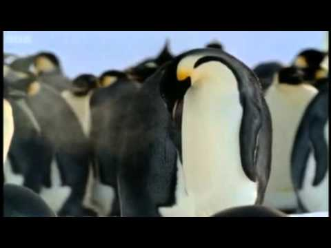 The Penguin Cafe Orchestra - Music For A Found Harmonium